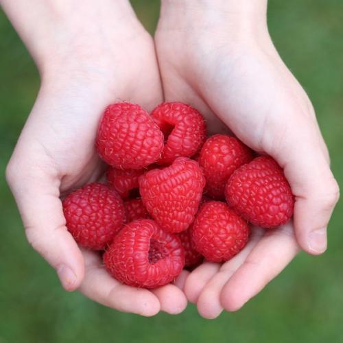 Equilibrez votre assiette avec la nutrithérapie et devenez acteur de votre santé !